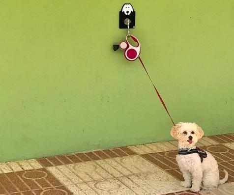 Gos lligat esperant a les postes de càmping