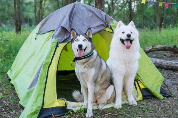 Càmping per a gossos a Catalunya
