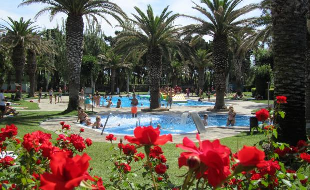 Tuin met palmbomen bij het zwembad