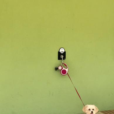 correa de perro