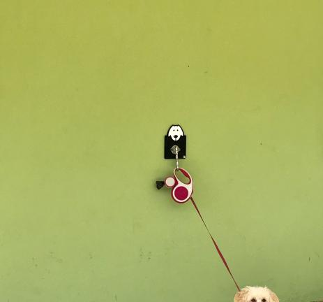 Corretja per a gossos